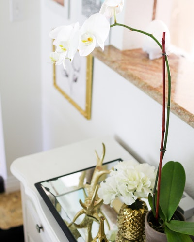 7 ways plants are supposed to look in your home | HipVan